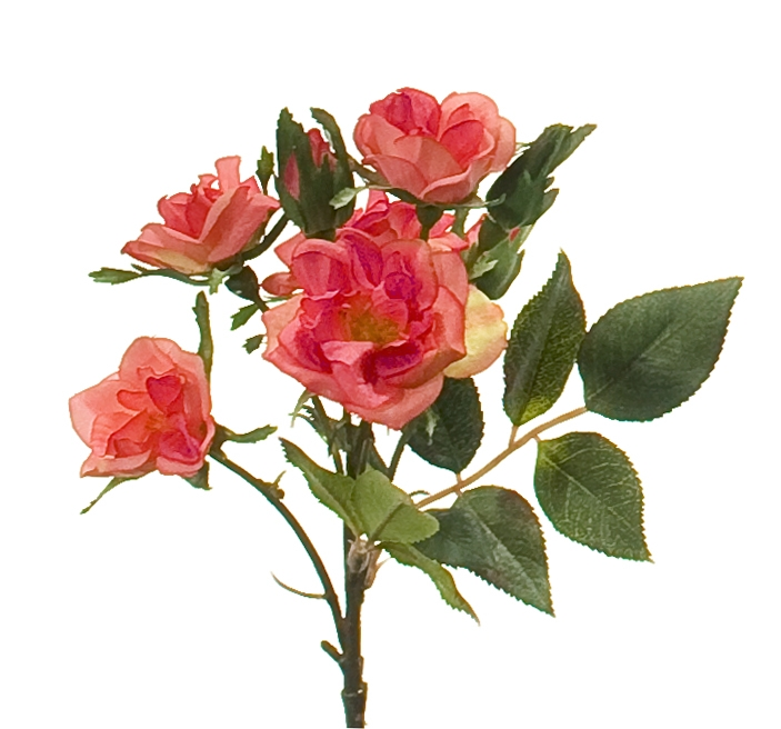 Rose | Box of 12