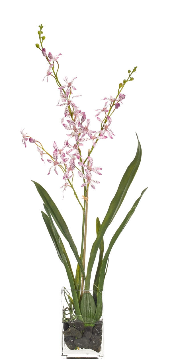 Orchid Vanda, Lavender, Glass Rectangle, 17wx8dx32h