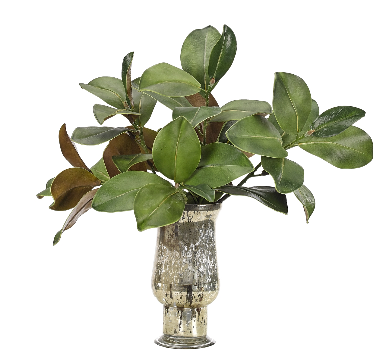 Magnolia Foliage, Glass Mercury Vase, 25wx21dx24h