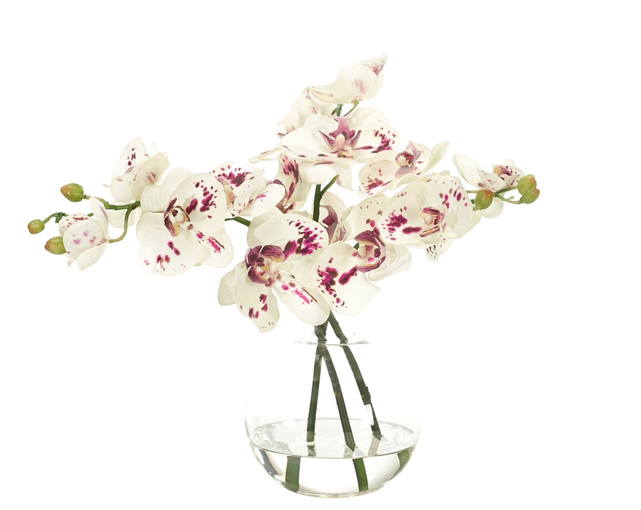 Orchid Phalaenopsis, White Purple, Glass Decantr, 14wx13dx12