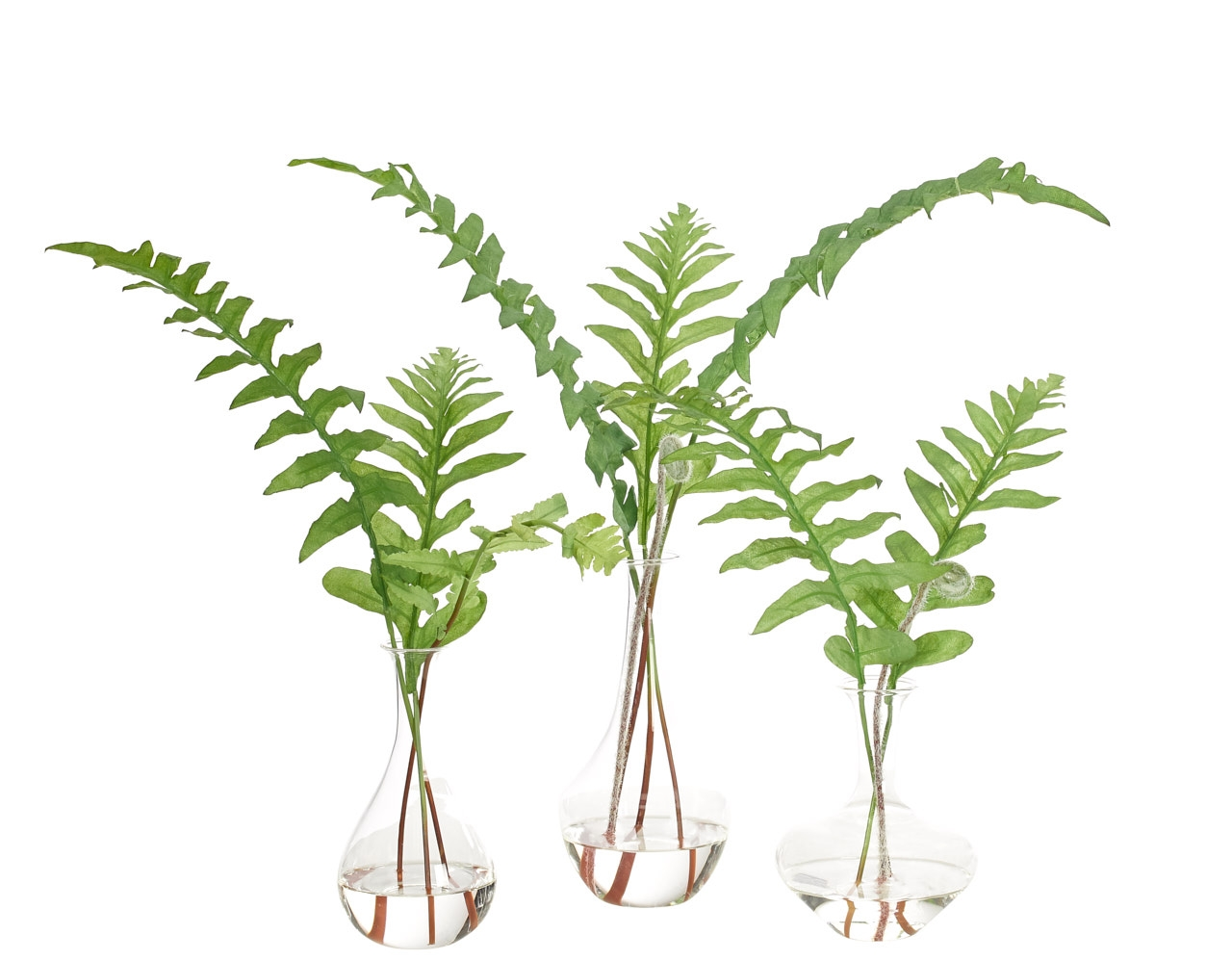 Ginger Fern, Glass Bud Vase, Set of 3,12-18wx5-11dx12-17h