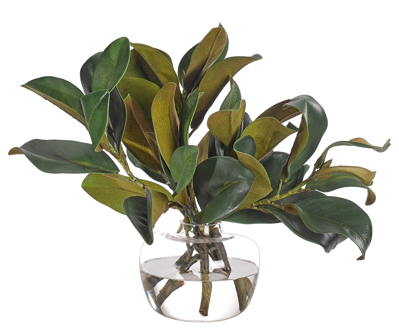 Magnolia Foliage, Glass Ginger Jar, 17wx14dx14h