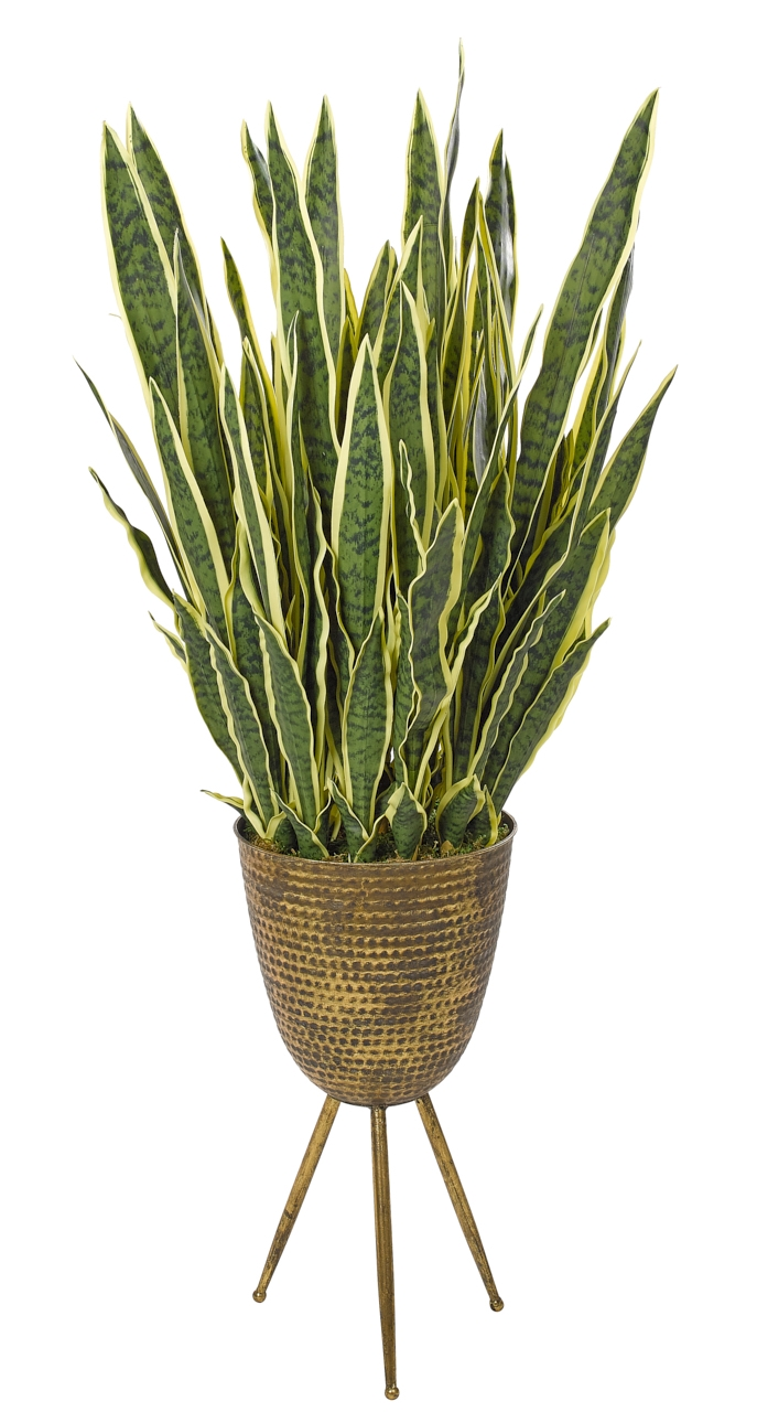 Preorder for July | Sansevieria, Yellow Green, Tripod Planter, 22wx22dx49h
