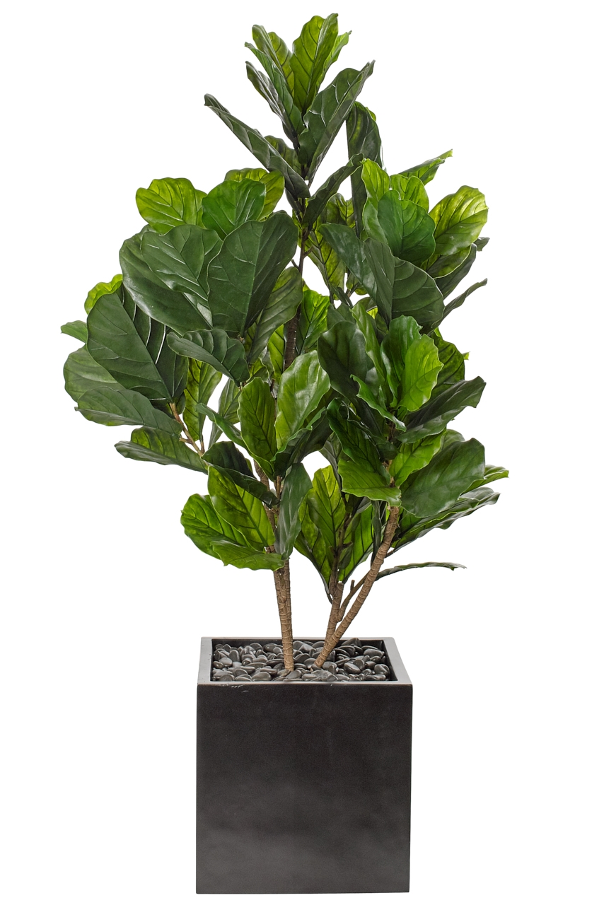 UV rated and suitable for outdoor use! | Fiddle Leaf Bush, Cube Matte Black, 41wx38dx73h