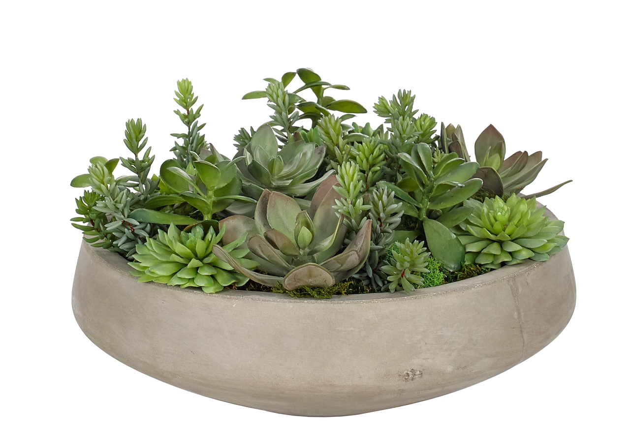 Succulent, Green Burgundy, Bowl Concrete Finish ,17wx17dx10h