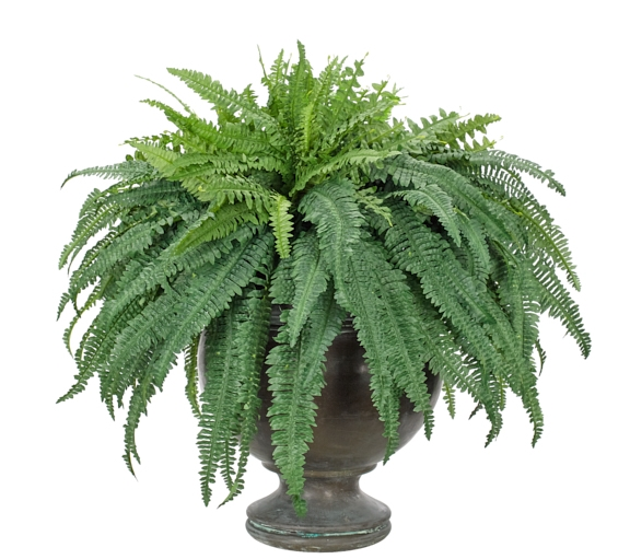 Fern Boston, Green, Pedestal Urn, 35wx35dx34h