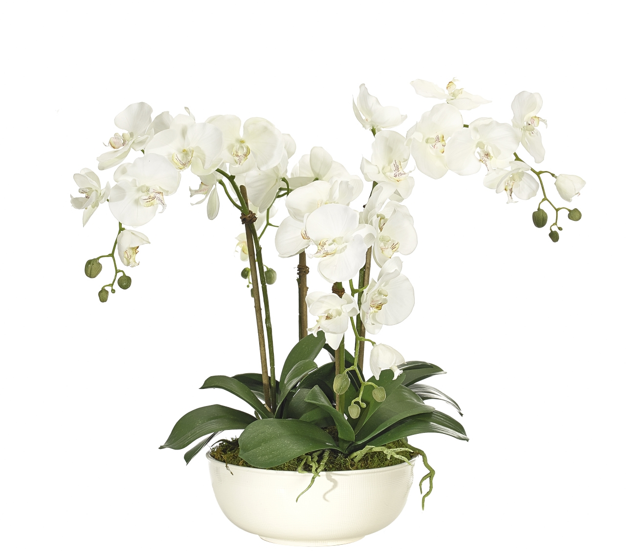 Orchid Phalaenopsis, White, Stoneware Bowl Crm, 27wx22dx23h