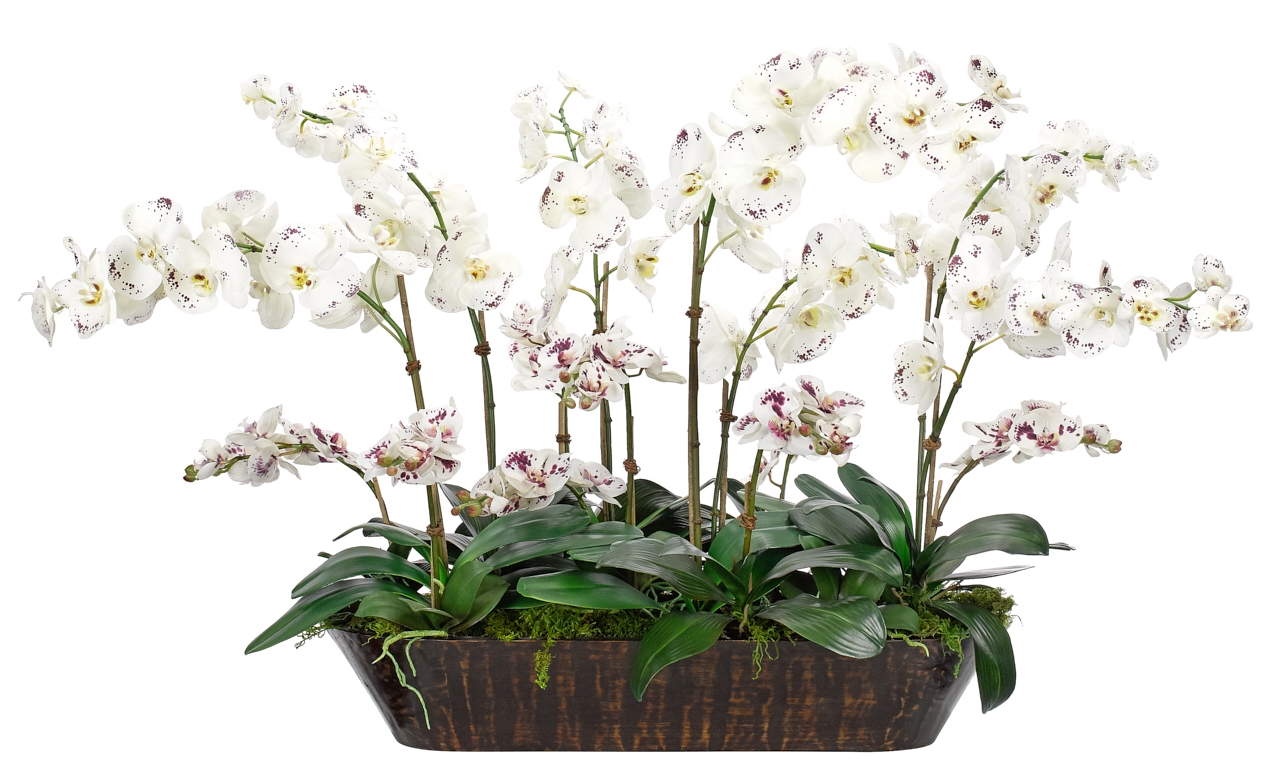 Orchid Phalaenopsis, White Burgundy, Wood Trough, 48wx31dx32