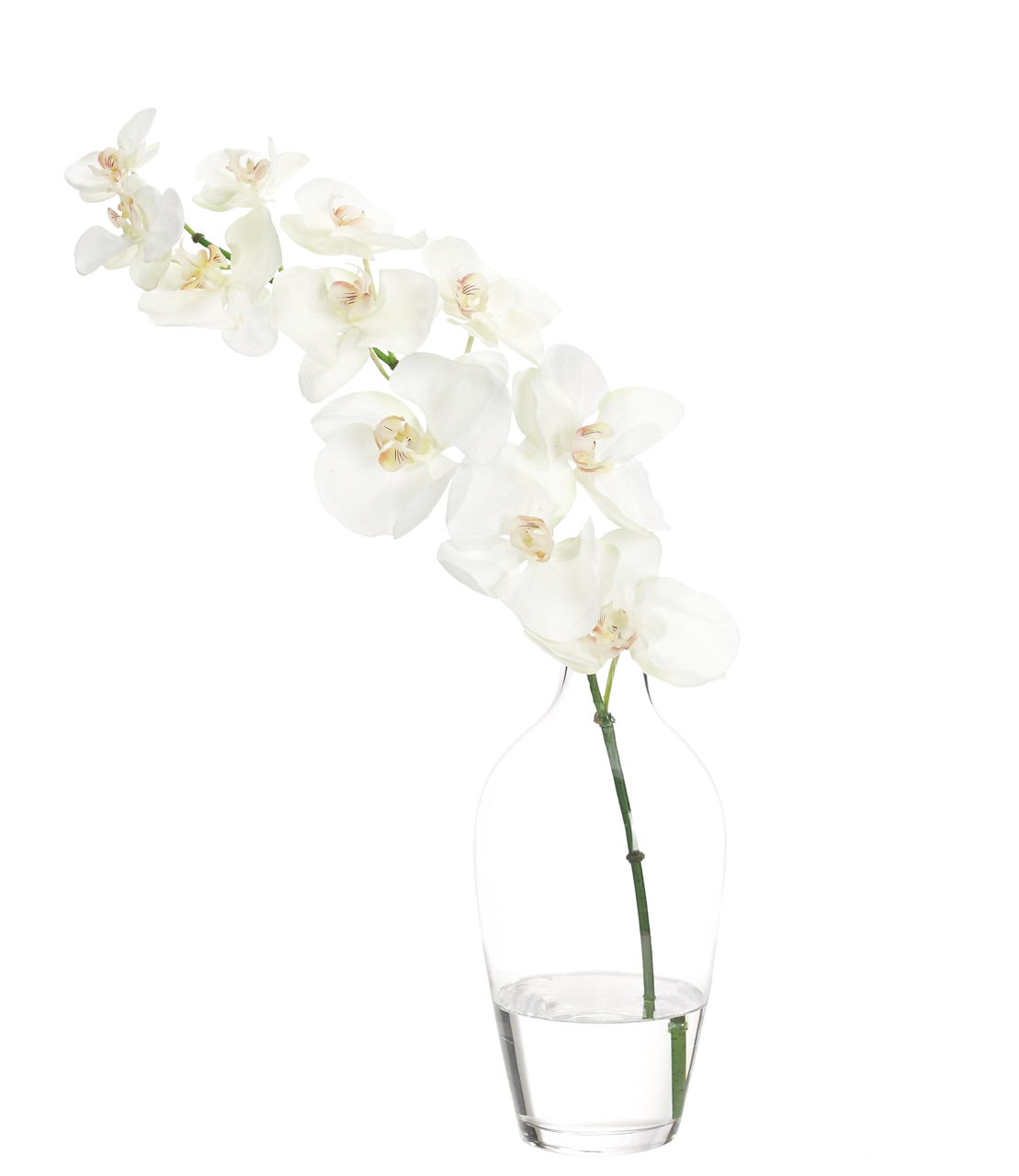 Orchid Phalaenopsis, White, Glass Jar, 16wx7dx21h