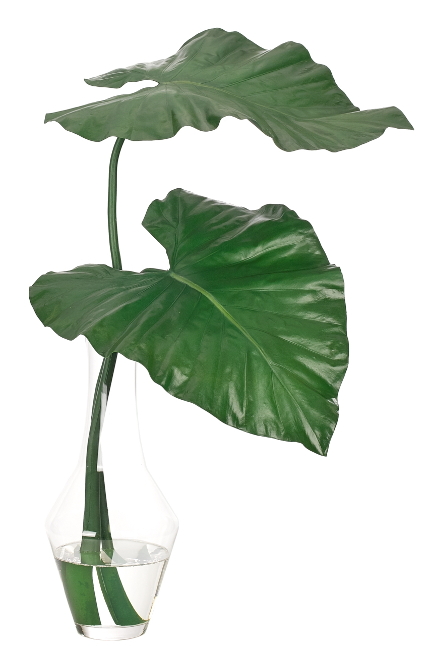 Colocasia Leaf, Green, Glass Flared Flute Vase, 20wx17dx26h