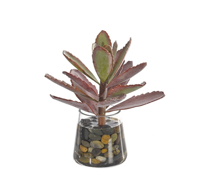 Succulent, Green Mauve, Glass Pyramid, 8wx8dx9h