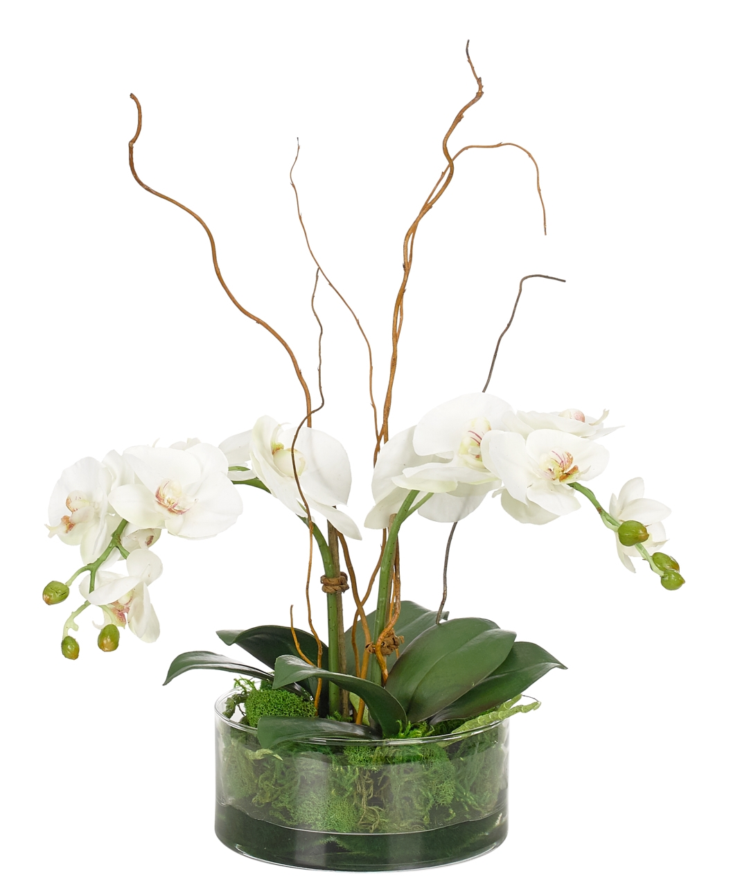 Orchid Phalaenopsis, White, Glass Bowl, 14wx11dx19h