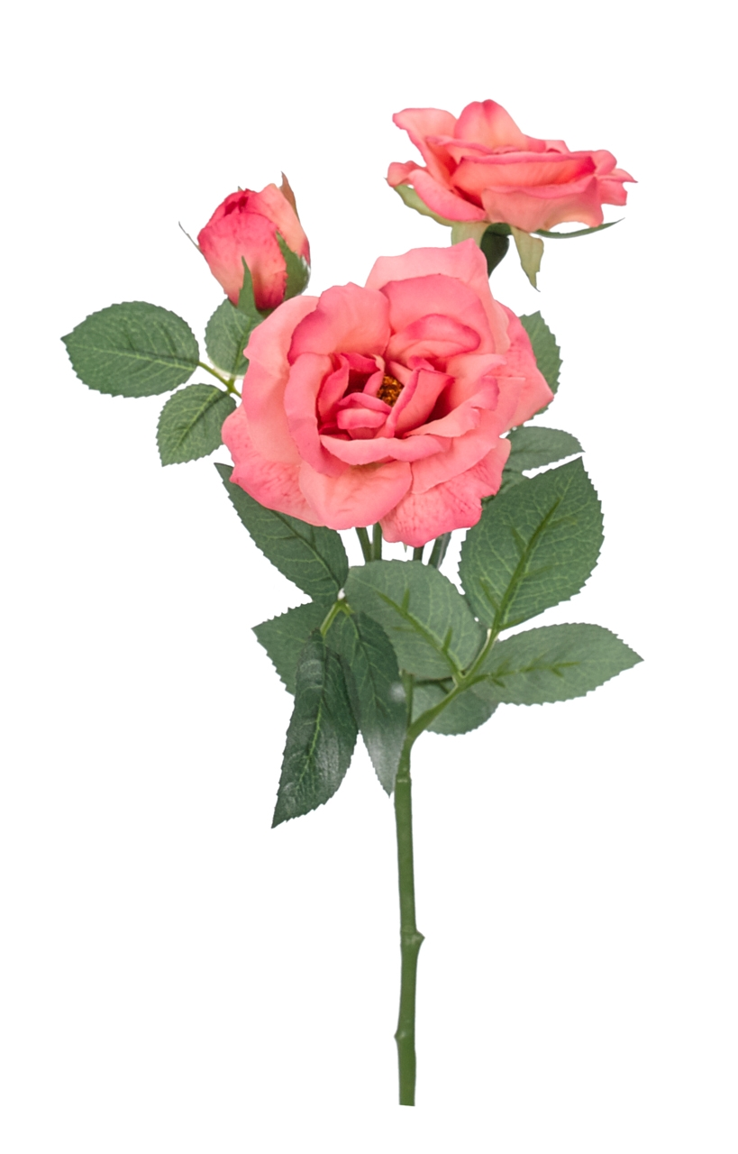 Rose  X3 Dark Pink  21"