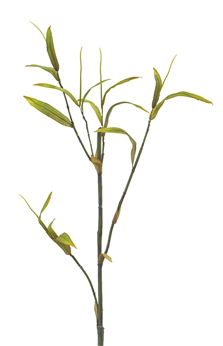 Bamboo Green Burgandy  | BOX OF 12