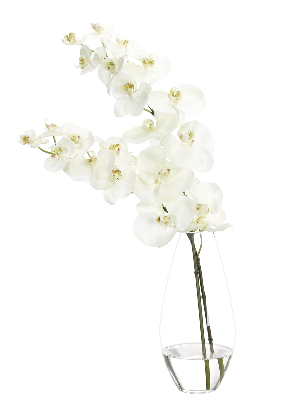 Orchid Phalaenopsis, White, Glass Teardrop Vs, 16wx11dx27h