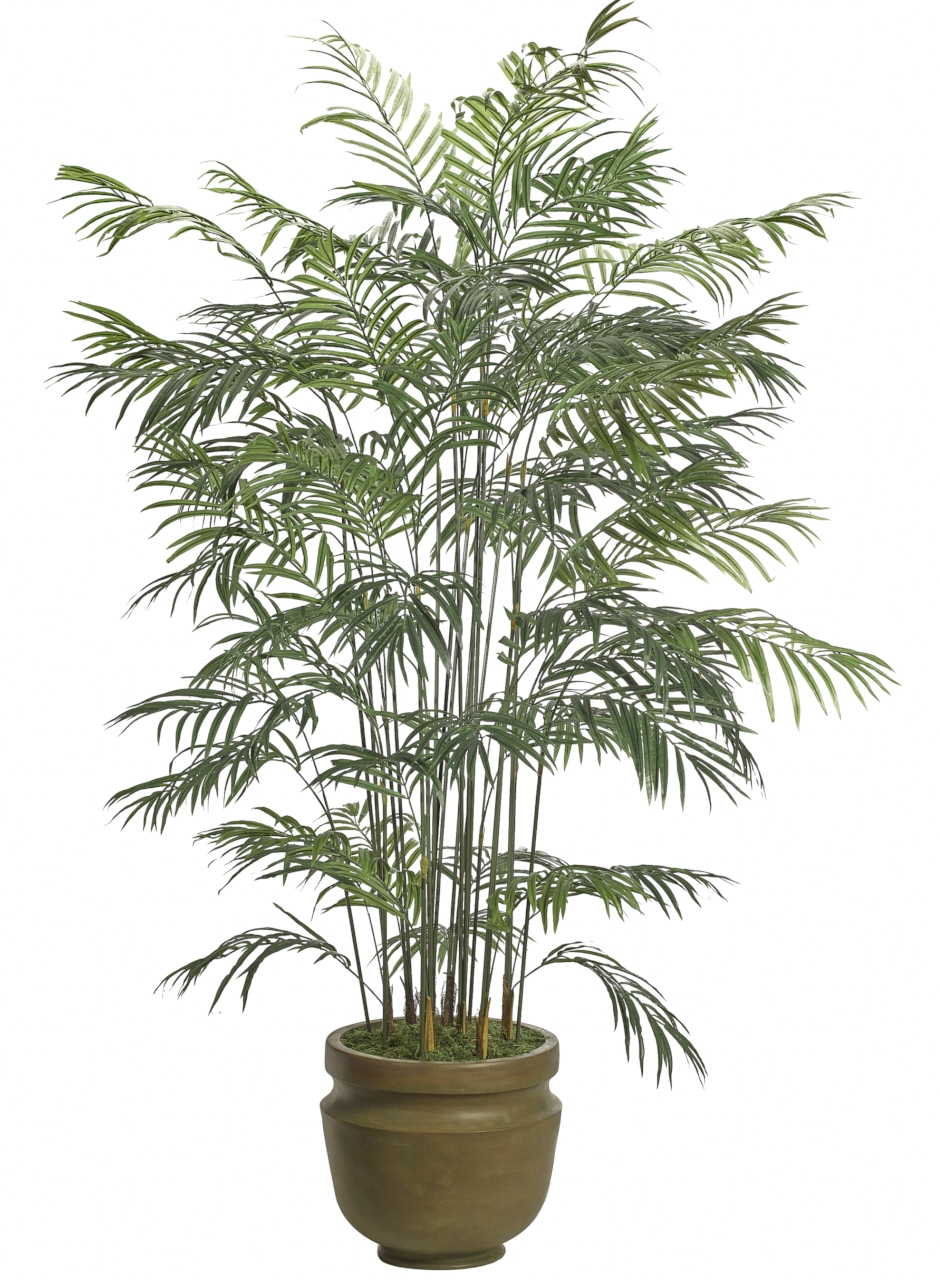 Areca Palm, Shown in Container Option B, Potter's Jar Antique Clay, 59wx59dx7.5'h