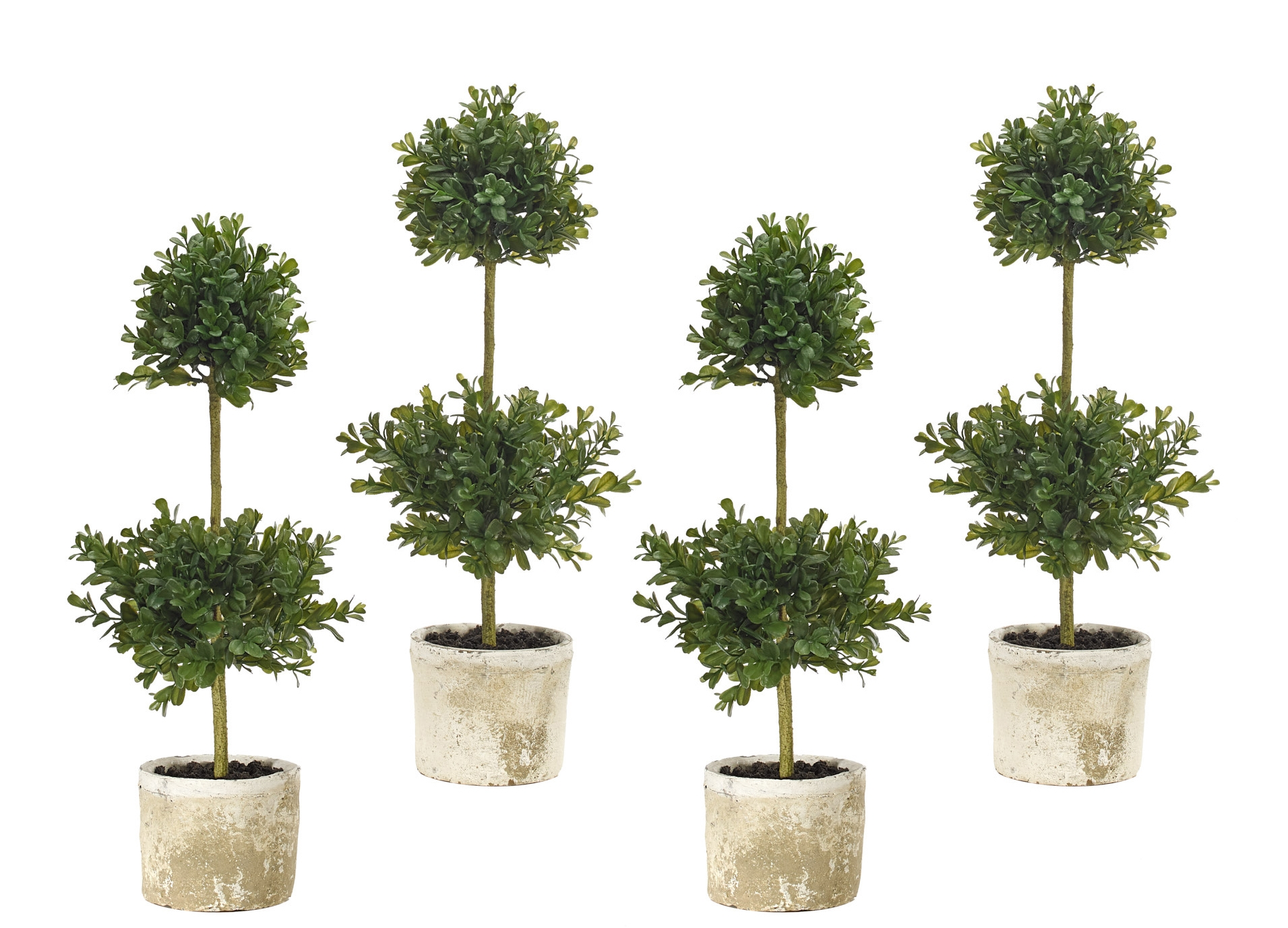 Boxwood Topiary, Terracotta Pot, Set Of 4, 8wx8dx21h