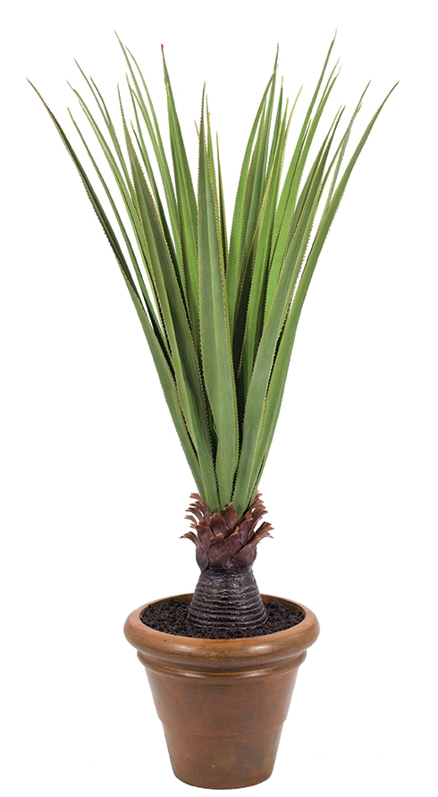 Pandanus, Tuscano Planter Antique Rust, 30wx30dx60h
