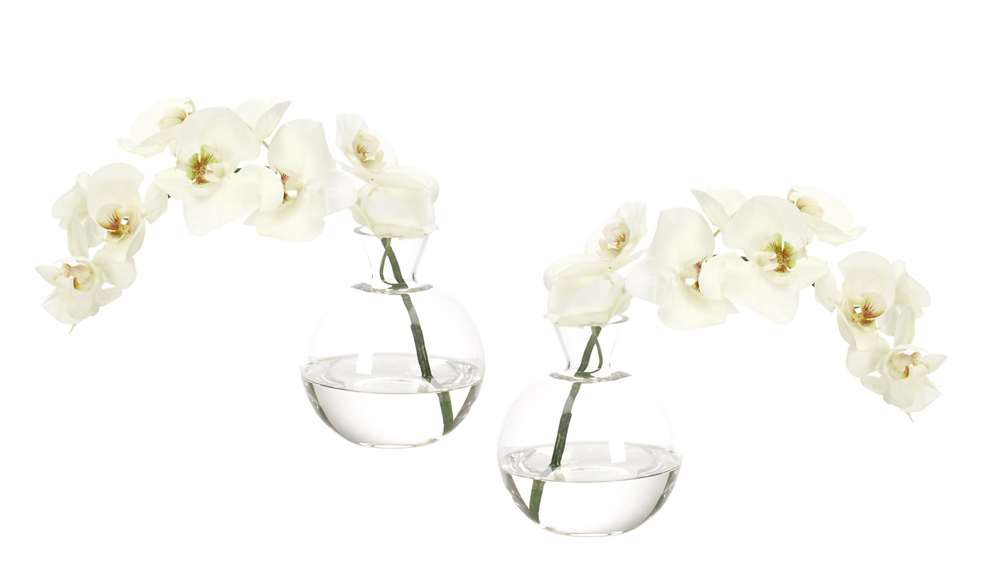 Orchid Phalaenopsis, White, Glass Bubble,Set Of 2,12wx5dx12h