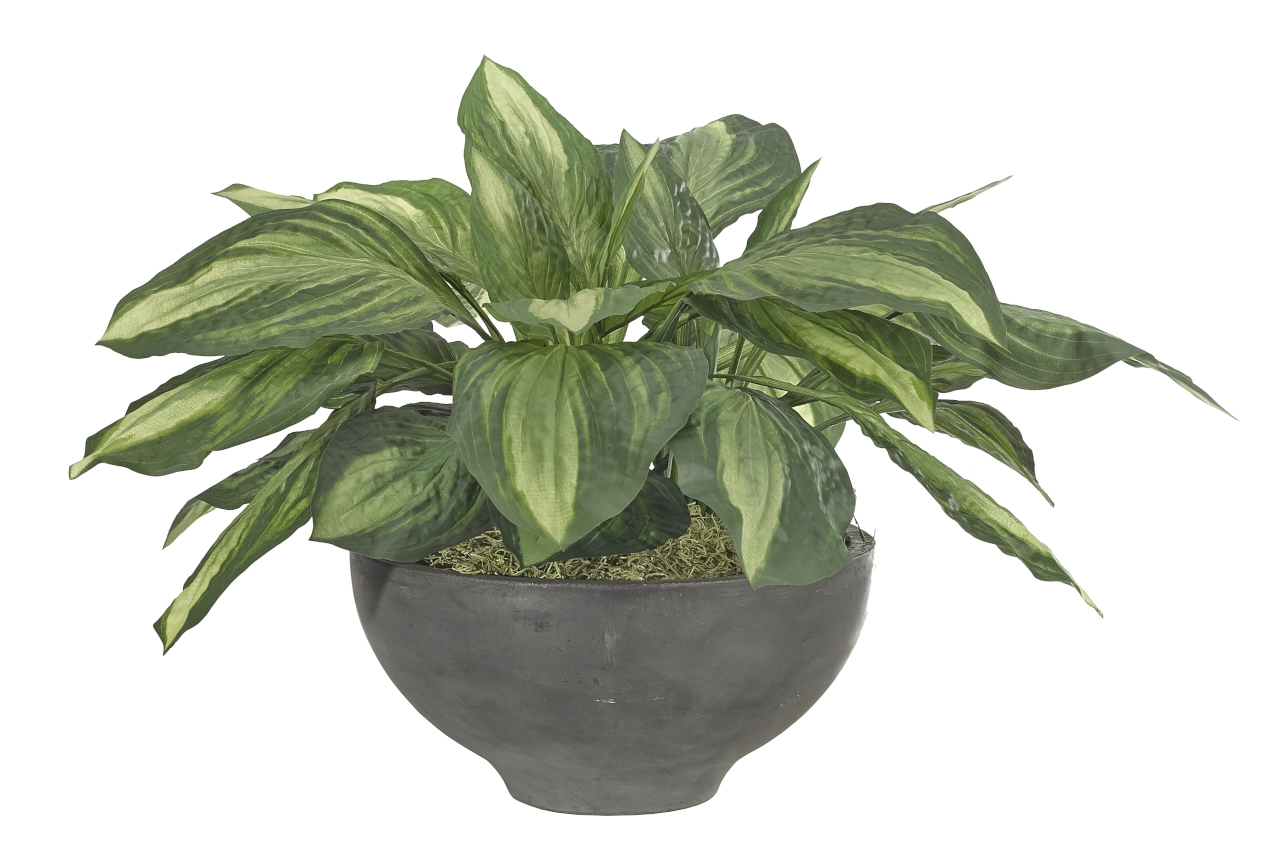Hosta, Green Yellow, Bowl Concrete Finish