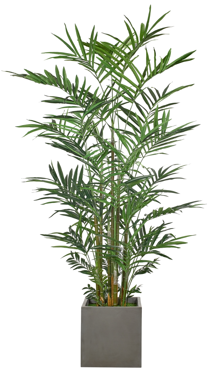 Kentia Palm, Potter's Jar Old Iron, 67wx67dx10'h
