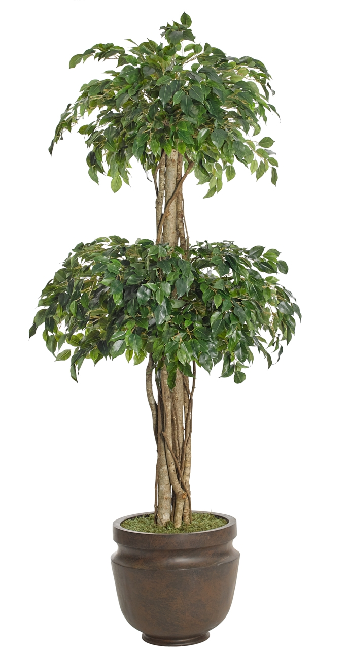 Ficus Double Topiary, Shown in container option A, Potter's Jar Old Iron, 38wx7'h