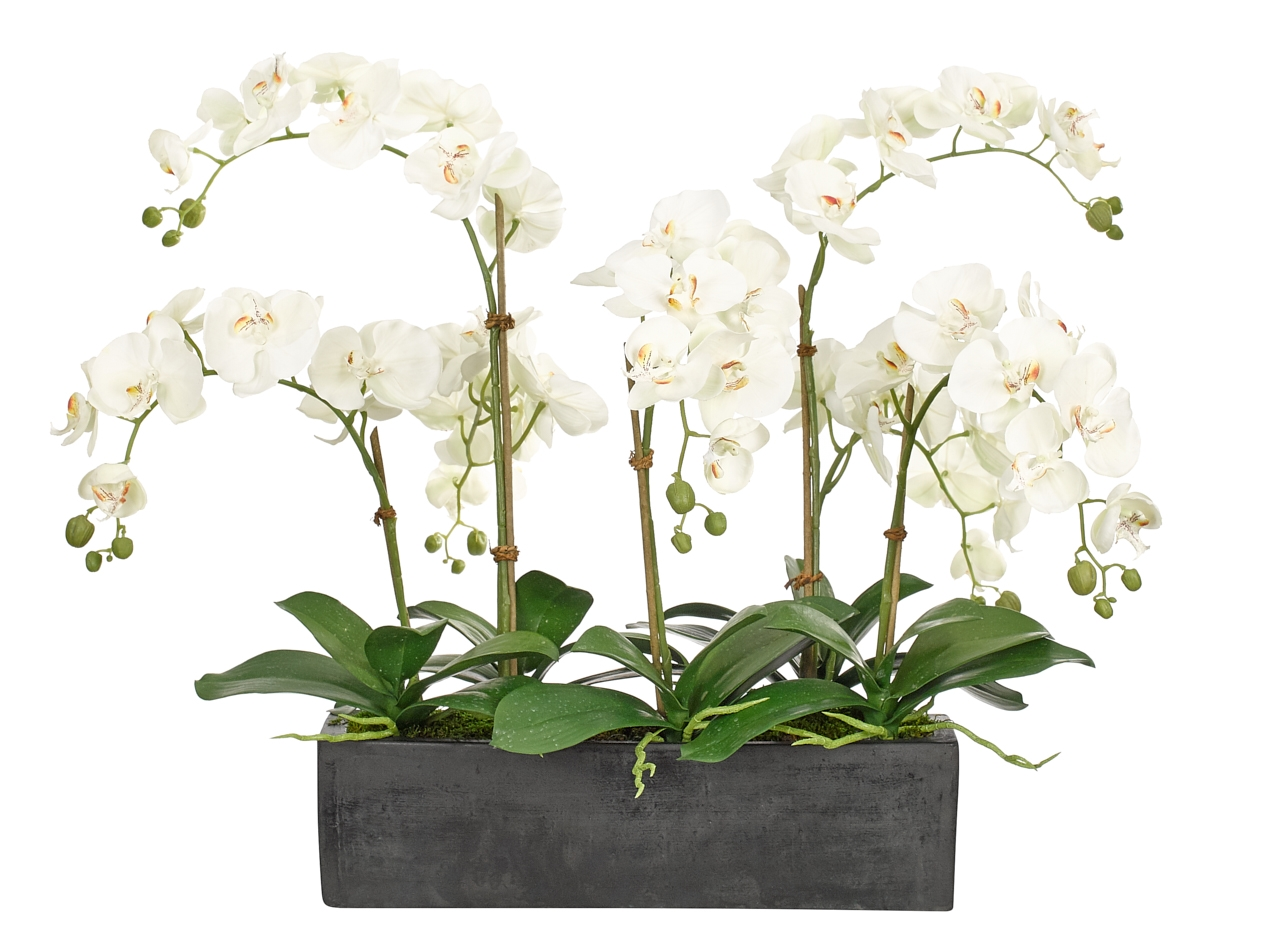 Orchid Phalaenopsis, White, Rectangle Planter, 33wx28dx27h