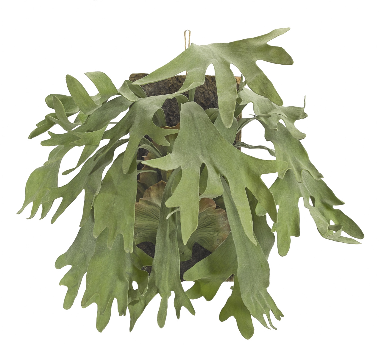Staghorn Fern, Green, Wall Hanger, 26wx18dx25h