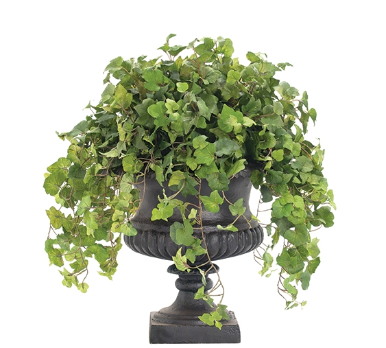 Hedera Helix, Cast Iron Urn Black, 23wx23dx24h