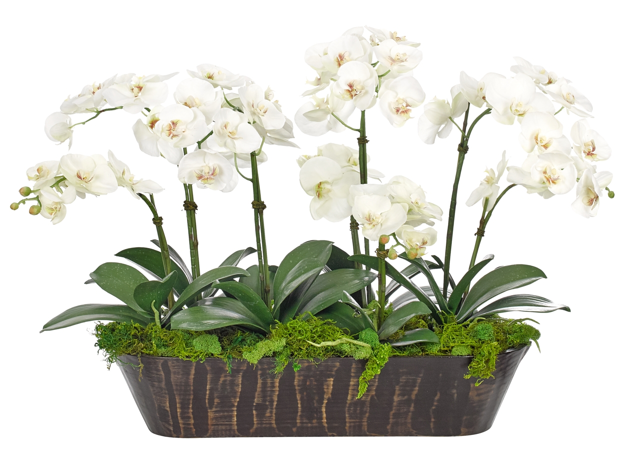 Orchid Phalaenopsis, White, Wood Trough, 32wx22dx23h