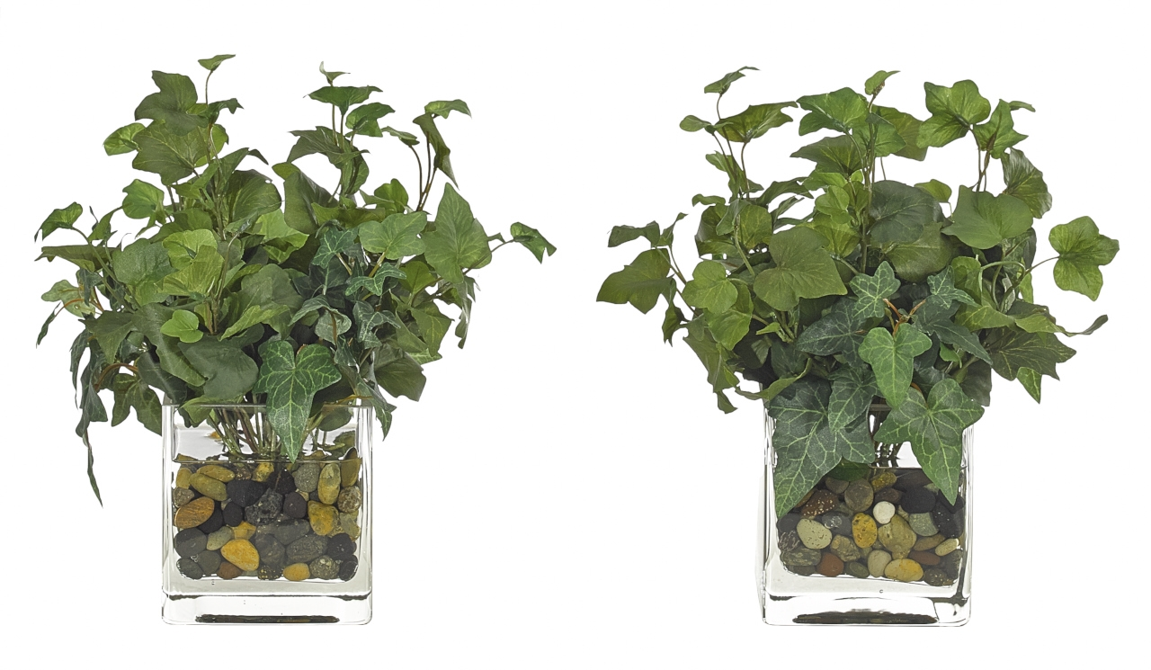 Hedera Ivy, Glass Cube, Set Of 2