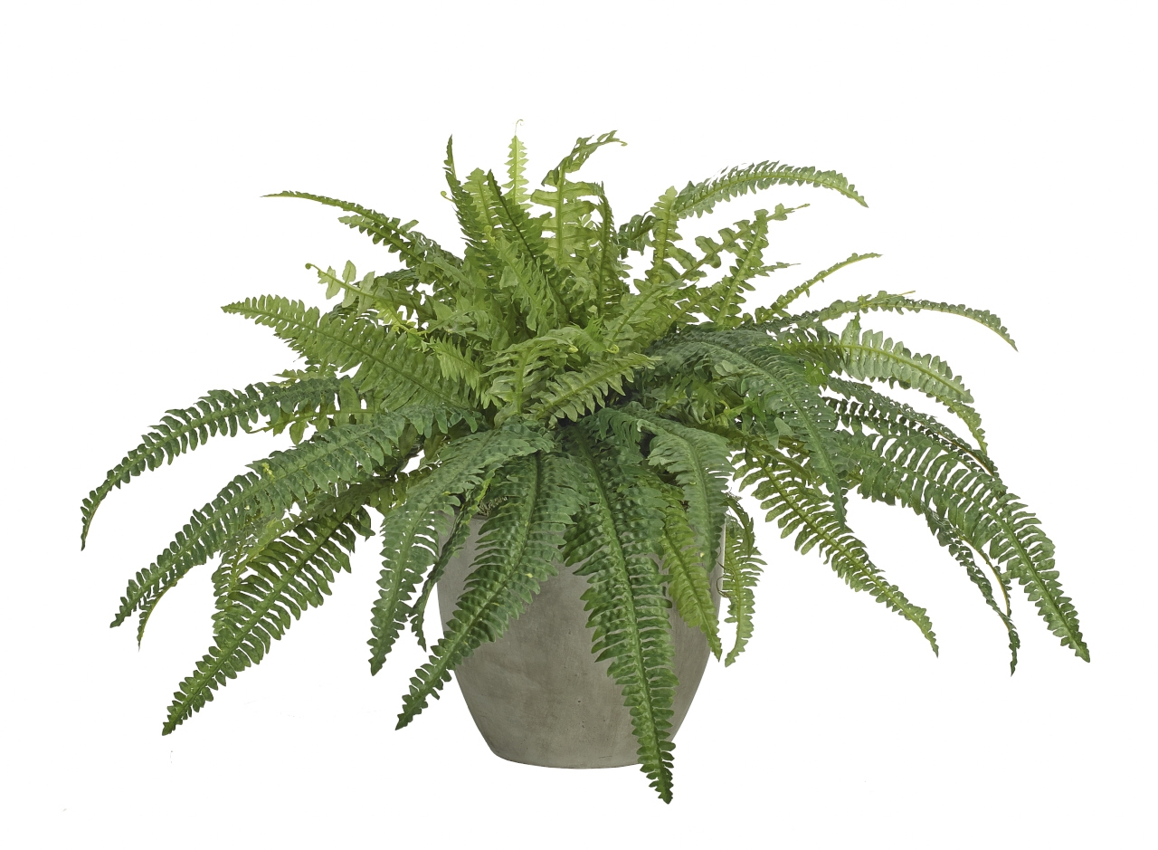 Fern Boston, Pot Concrete Finish, 39wx36dx22h