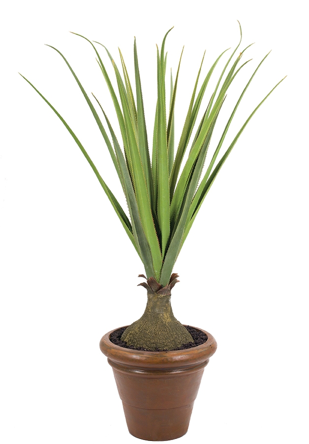 Pandanus, Tuscano Planter Antique Rust, 48wx48dx60h