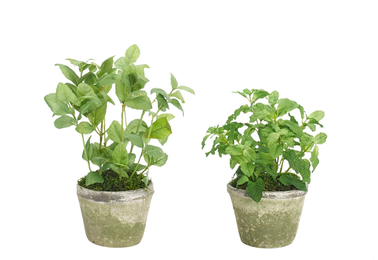 Herbs, Green, Terracotta Pot, Set Of 2, 8-10wx8-10dx10-13h