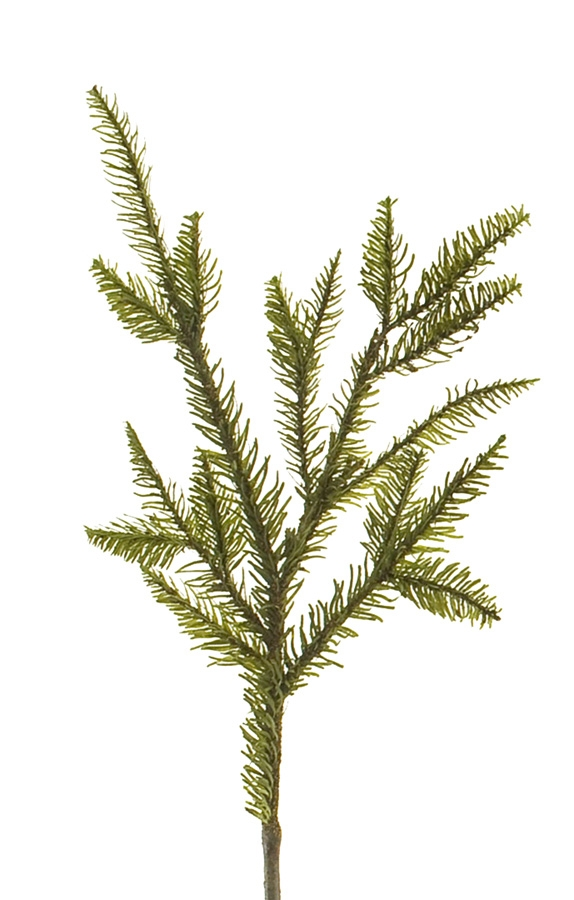 Noble Fir  | BOX OF 12