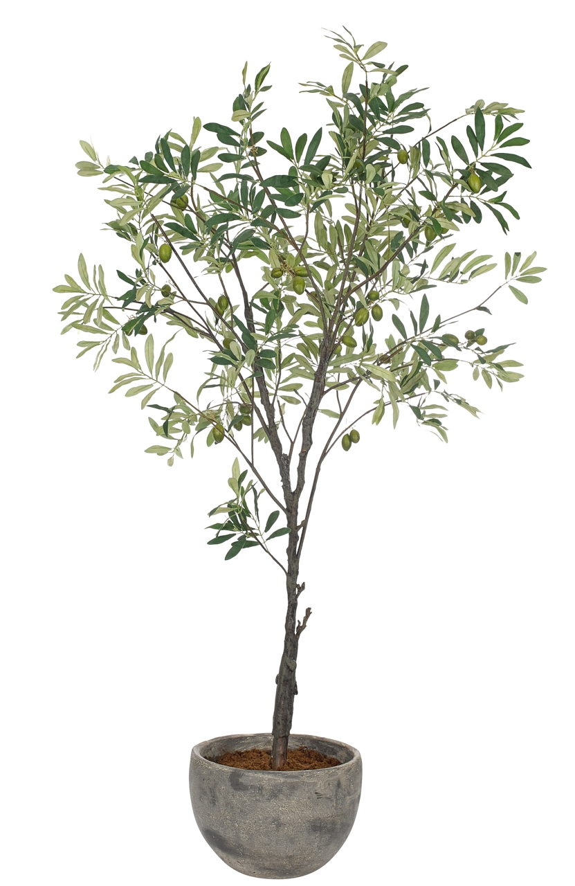 Olive Tree Potted, 40wx36dx56h