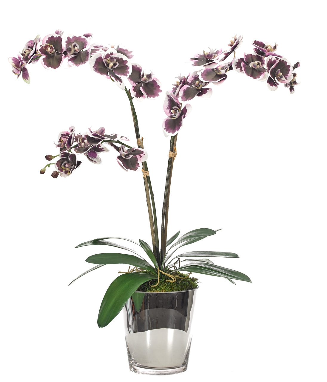 Orchid Phalaenopsis, Purple, Mirrored Cylinder, 26wx15dx29h
