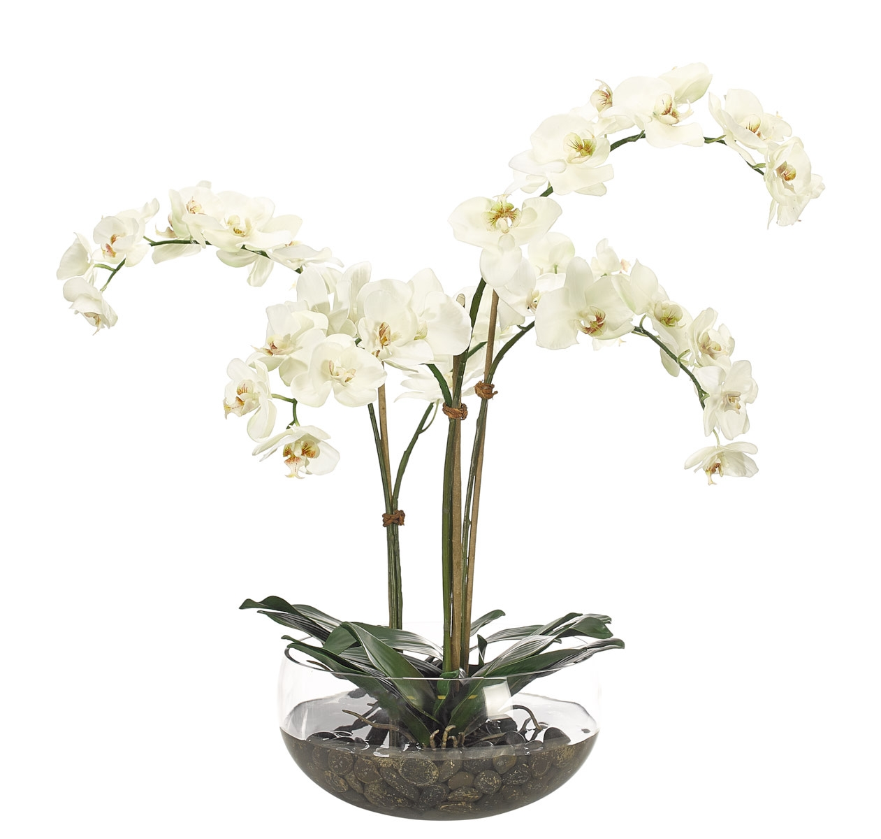 Orchid Phalaenopsis, White, Glass Bowl, 25wx21dx28h