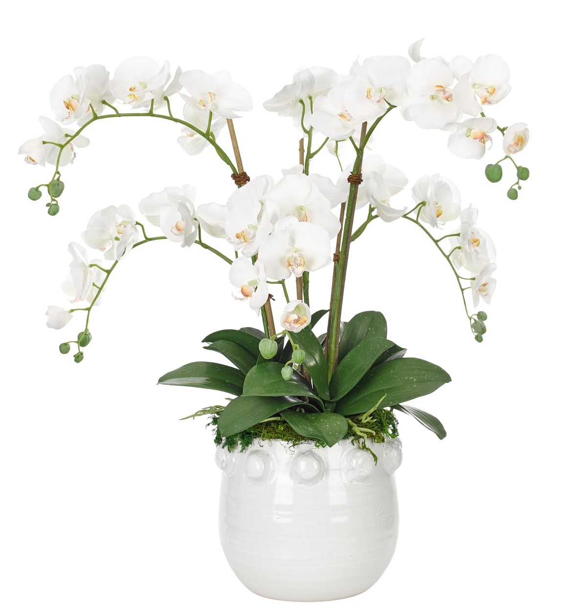 Orchid Phalaenopsis, White, White Pot, 26wx30dx29h