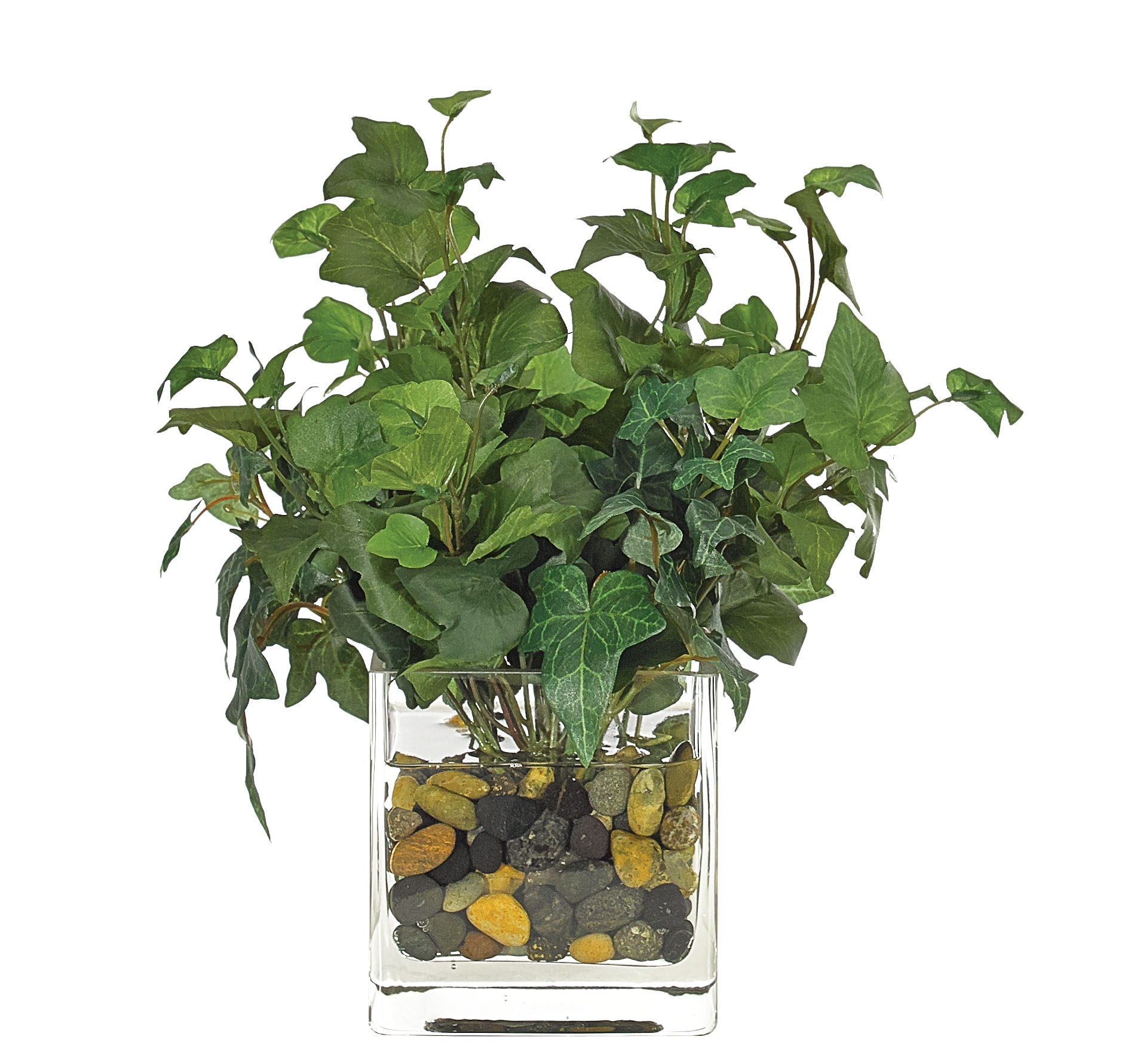 Hedera Ivy, Glass Cube