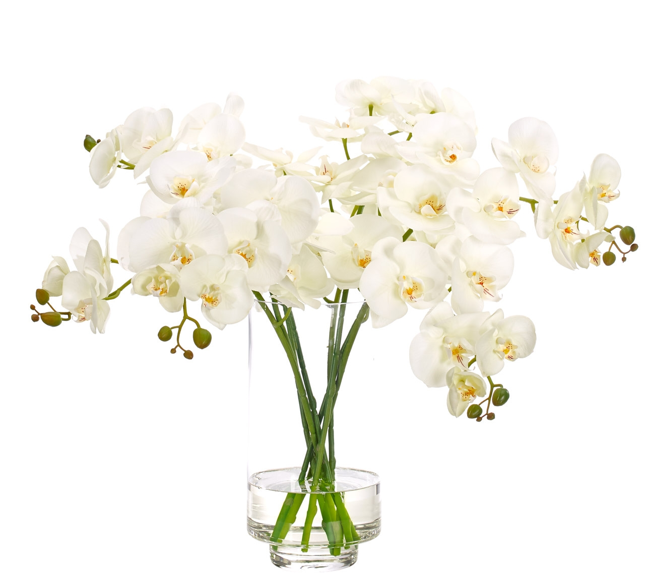 Orchid Phalaenopsis, White, Glass Cylinder, 27wx26dx21h